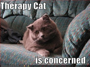 funny-pictures-therapy-cat