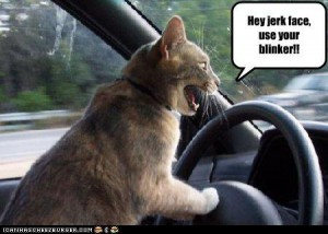 lolcat-angry-driver